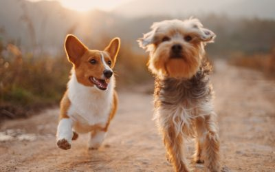 Tips About Treating Pet Accidents